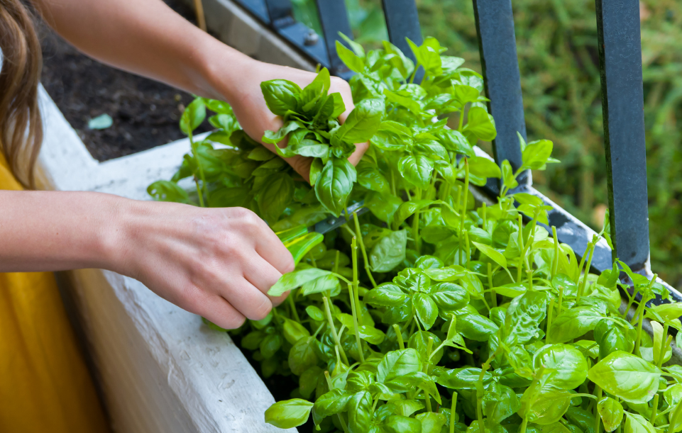 Planting an Herb Garden in Your Sunroom